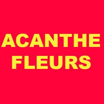 Acanthe Fleurs